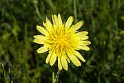 Delphinium wild flower Photographed in Georgia