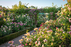 Borders of roses in The Long Garden at David Austin Roses