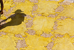 Man working with animal skins in the tanneries of Chouwara, Fes al Bali medina, Fes, Morocco
