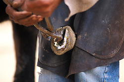 A farrier replaces the shoes on an animal at SPANA Marrakech, Morocco.