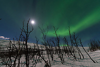Even though the moon was bright, the aurora had no problem shining through. And the moonlight made for better pictures as it lit up the landscape.