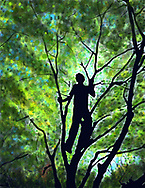 silhouette of a kid up in a tree, Prospect Park, Brooklyn, New York
