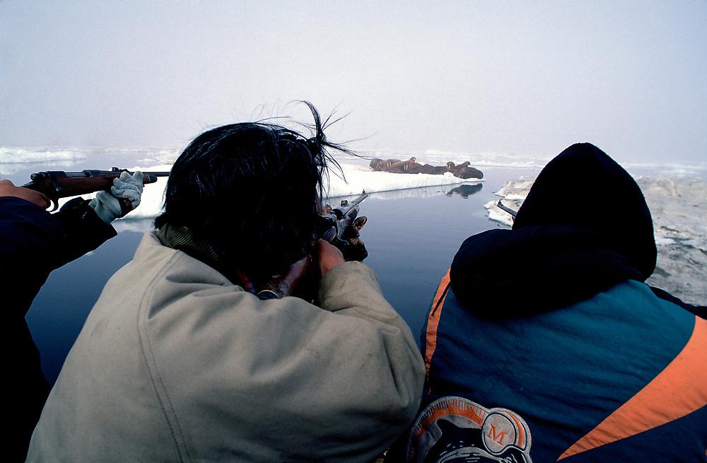 Barrow, Alaska. Walrus hunters on the sea oce of Barrow.