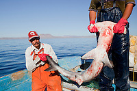 Gill net fishermen show off a hammerhead shark, their catch of the day, in Kino Bay, Mexico.