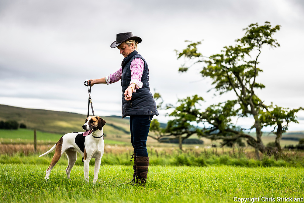 Overacres, Otterburn, Northumberland, England, UK. 19th August 2018. The Border Hunt hold their annual Hound and Terrier show at Overacres Farm near Otterburn in Northumberland.