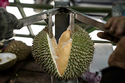 A worker opens a durian for customers at Durian Kaki, a roadside fruit stall owned by Tan Eow Chong and his family in Bayan Lepas, Pulau Pinang, Malaysia on Sunday, June 16th, 2019. Tan Eow Chong is an award-winning durian farmer famed for his Musang King variety, and last year exported 1000 tons of the fruit to China from his family-run durian empire, expanding from an 80 acre farm to 1000 acres.  Photo by Suzanne Lee/PANOS for Los Angeles Times