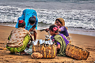 women are sorting the daily fish catch
