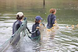 Earthwatchers Setting Net