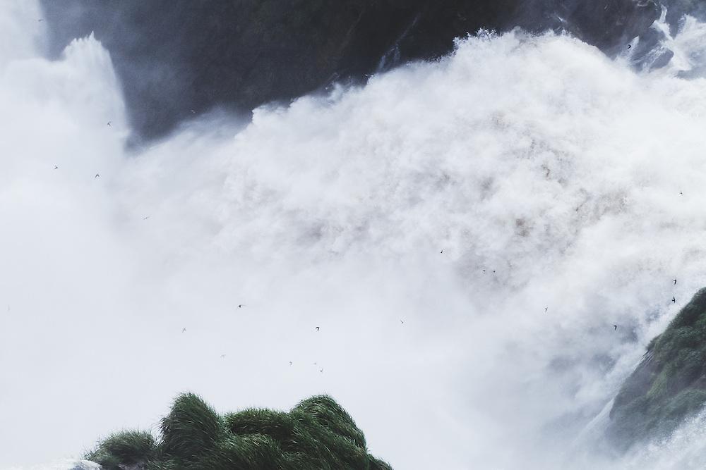 Swallows at Iguazu Falls, Argentina / Brazil.