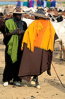 Mali - Sofara -Transhumance des troupeaux Peuls - Traversé du fleuve Bani