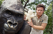 Posing next to a gorilla sculpture at the Brookfield Zoo in suburban Chicago, gorilla keeper Craig Demitros holds a stuffed doll he used to teach a western lowland gorilla named Binti Jua about how to tend to a baby gorilla. (photo by John Zich)