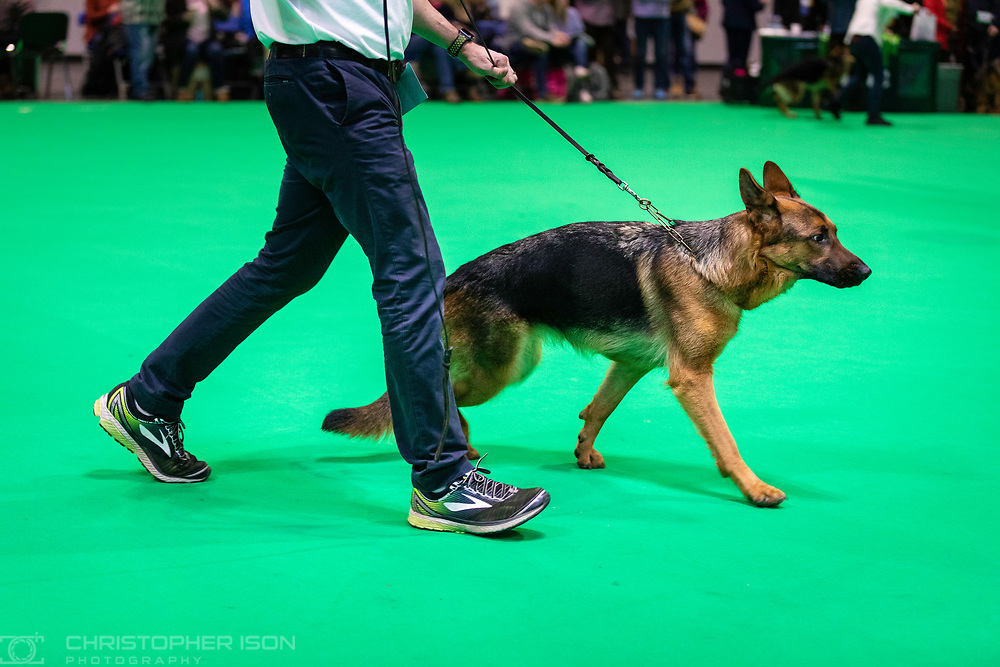 Crufts 2019 shot for The Kennel Club.<br /> Picture date: Friday March 8, 2019.<br /> Photograph by Christopher Ison ©<br /> 07544044177<br /> chris@christopherison.com<br /> www.christopherison.com