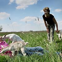 """Nederland,Zegveld , 30 mei 2011..Juerd van den Burgt en partner Rebecca de Boer van locatie """"de Blauwe Meije"""" midden in het Groene Hart in zijn weiland met geit Pien en de babygeitjes.Foto:Jean-Pierre Jans"""