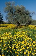 Mediterranean Farmland