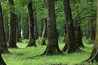 Slavonian oak (=Common oak - Quercus robur) and ash (Fraxinus sp.) forest in a retention basin of the Sava river. Near Mužilovčica village. Lonjsko Polje Nature Park. Ramsar Site. Sisack-Moslavina county. Slavonia region. Posavina area. June 2009. Croatia. 1<br /> Elio della Ferrera / Wild Wonders of Europe