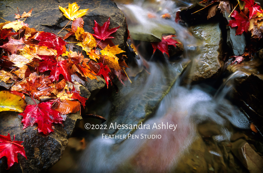 Intimate landscape of Cuyahoga Valley National Park's Blue Hen Falls, with autumn leaves in palette of colors. From original film image.