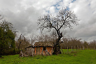 A shed under a scary tree