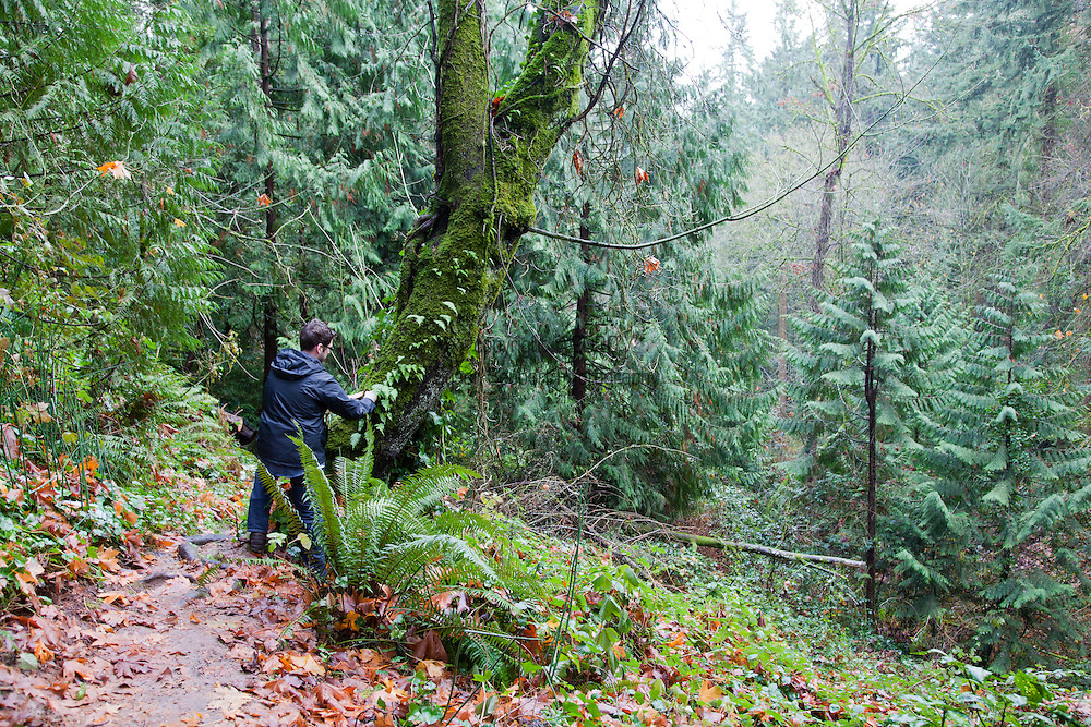Castagna Chef, Matthew Lightner, foraging for wild greens from a forest in Portland, Oregon. Pictured here Matt Harvests some fern roots.