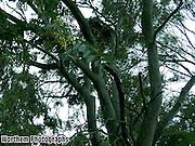 A mini rainforest in a everyday American backyard