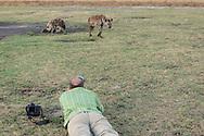 Impressionen aus dem Liuwa Plain Nationalpark in Sambia mit Fotografen am Werk mit einer Hyänenmutter und zwei Jungen.
