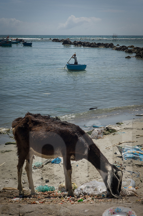 A goat scavenges for food along a trash-filled beach of My Tan, Ninh Thuan Province, Vietnam, Southeast Asia