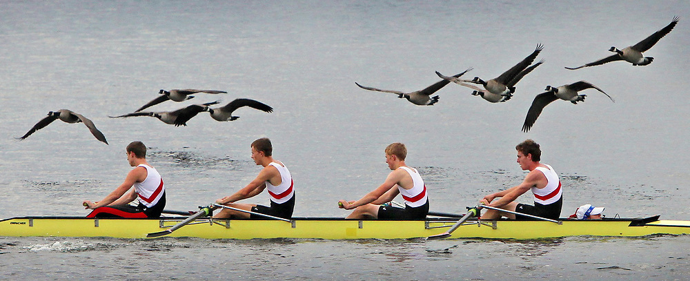 A low-flying skein of geese changes direction as Lake Union Crew competes in the men's 4+ event during the Tail of the Lake Regatta on Sunday, Oct. 2, 2011, near Gas Works Park in Seattle.  (Steve Ringman / The Seattle Times)