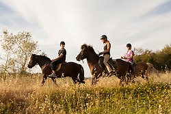 Europe, Italy, Tuscany, Volterra, people horseback riding on Icelandic Ponies.  MR