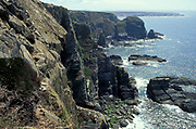 South Stack, RSPB Reserve, Anglesey, North Wales, UK