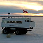 Polar Bear (Ursus maritimus) Tundra Bugg y used to view bears at Cape Churchill on the shores of Hudson Bay near Churchill, Manitoba. November. Canada. Winter.