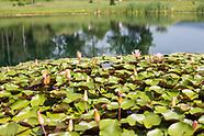 Ponds Subdivision