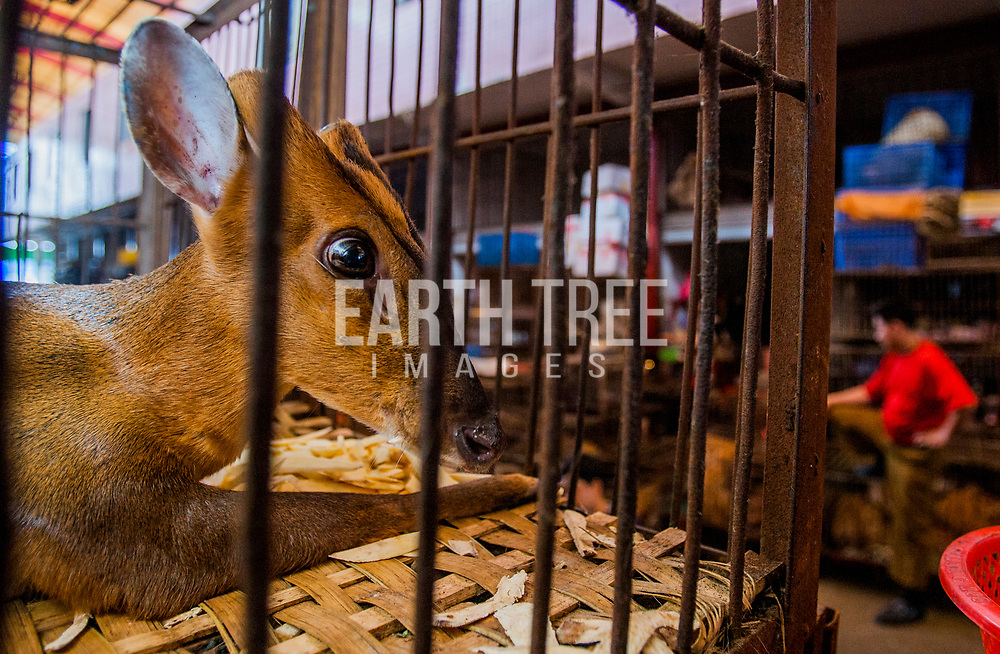 Wild animal market, Guangzhou, China. Photo: Paul Hilton for Earth Tree Images