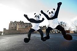 At Edinburgh castle..The Scottish Sun's two pandas visit Edinburgh to see the sites..Pic © Michael Schofield.