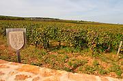 Vineyard. Les Petits Epenots, Hospices de Beaune. Pommard, Cote de Beaune, d'Or, Burgundy, France