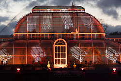 © Licensed to London News Pictures. 22/11/2016. The Palm House with a display of laser beams and streams of light at the Christmas Lights Festival at Kew Garden. London, UK. Photo credit: Ray Tang/LNP
