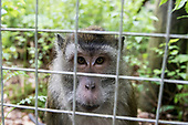 Rescued primates