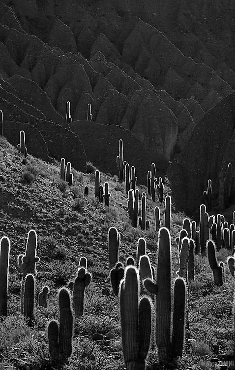 Parque Nacional de Los Cardones, Salta, Argentina, America