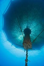 3,000-cubic-meter submersible fish pen installed in open ocean just off Kona Coast to raise Kona Kampachi, Hawaiian yellowtail, aka almaco jack or kahala, Seriola rivoliana, Kona Blue Water Farms, Big Island, Hawaii, Pacific Ocean