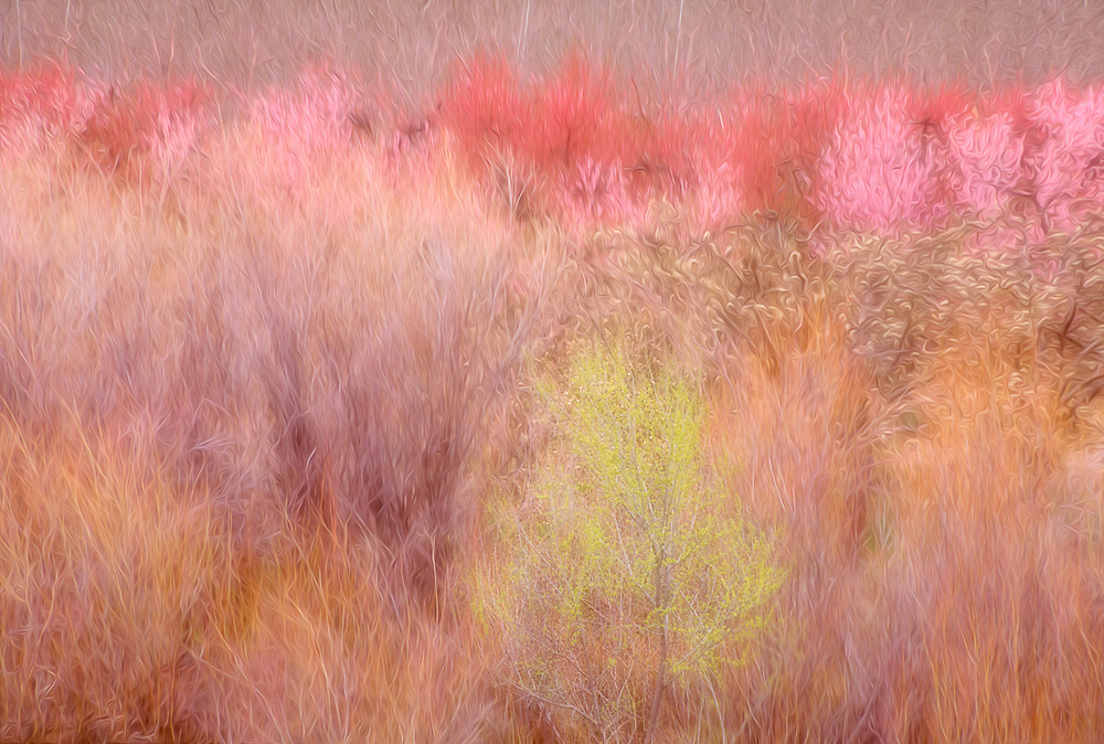 Orchard and riparian vegetation, Eastern Oregon, USA