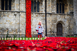 © Licensed to London News Pictures. 08/11/2018. Selby UK. 3 year old Scarlet looks at the thousands of hand knitted poppies that are flowing from the tower & in to the grounds of Selby Abbey in Yorkshire to mark the 100th Anniversary of the end of the First World War on the 11th of November. Photo credit: Andrew McCaren/LNP