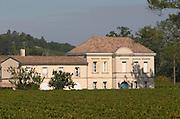 Vineyard. XXXX Saint Emilion, Bordeaux, France