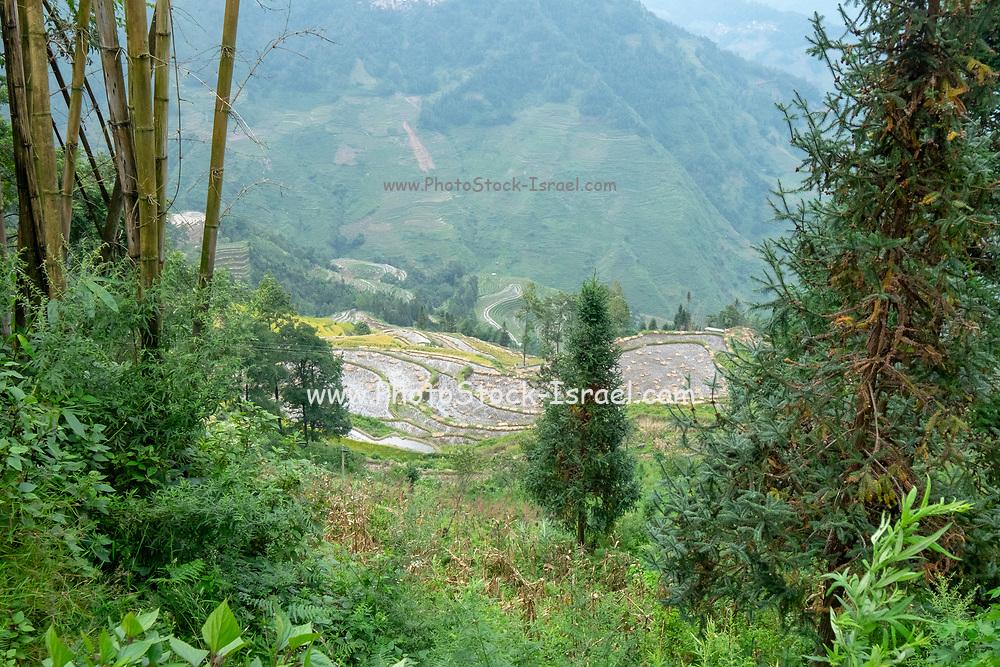 Hani Minority village, Yuanyang County, in Honghe Prefecture in southeastern Yunnan province, China,