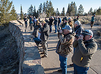Wildlife tour with Wyoming Game and Fish commissioners and other state wildlife stakeholders watch wolves stalk a herd of elk from the Snake River Overlook during an April 19 wildlife tour in Grand Teton National Park.