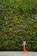 Green wall, Sloane Square, London. This wall was a joint project between the J-Crew clothing store and Buglife. The wall was designed to provide nectar for urban bees.