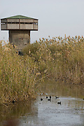 Israel, Hula Valley, Agmon lake a look out hide used for bird research and photography winter November 2007