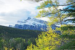 Mt. Rundle and golden aspen in Banff National Park