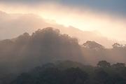 Sunrise View over Jungle Canopy, Panama, Central America, Gamboa Reserve, Parque Nacional Soberania, sunbeams through clouds