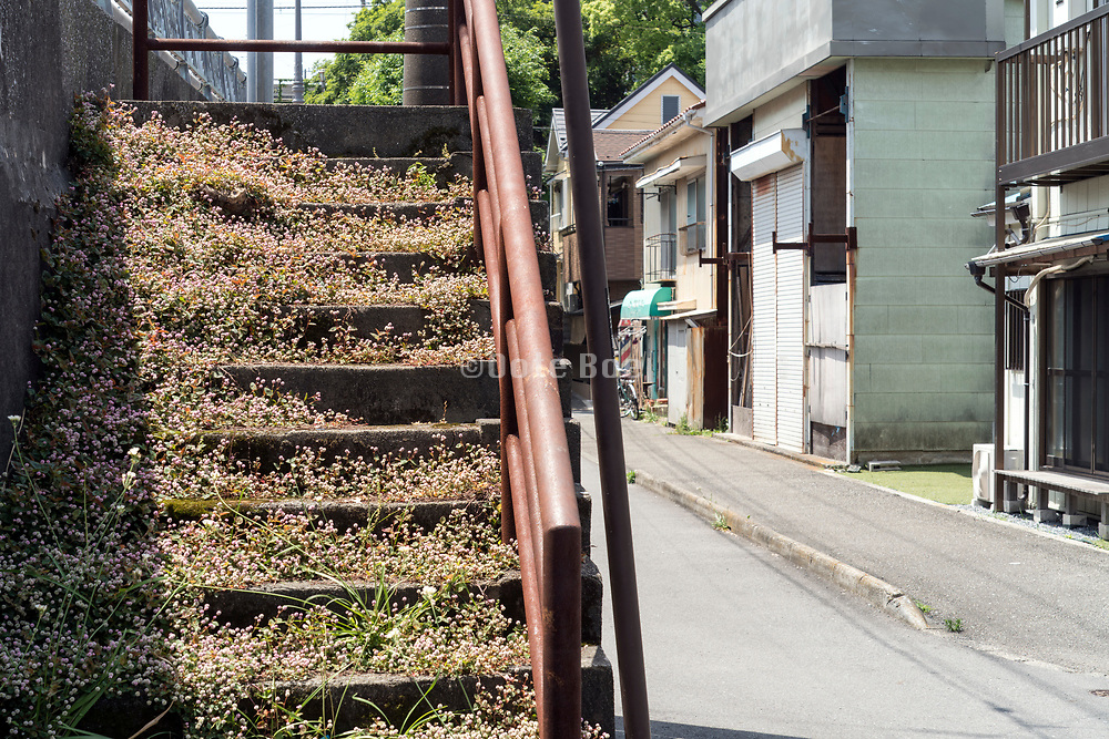 grass and flowers growing on the steps of a concrete stair Japan yokosuka