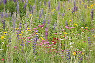"""A field of wildflowers grows over an Orleans condominium""""s septic system."""