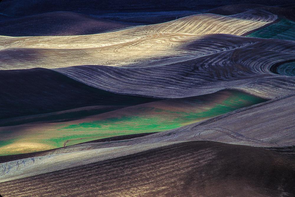 Wheat field, Palouse Hills, Wahington, USA