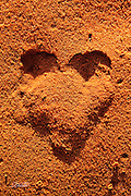A pair of mouse footprints push the soft desert sand into a heart at South Coyote Buttes, Utah.